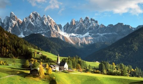 Какие растения в италии